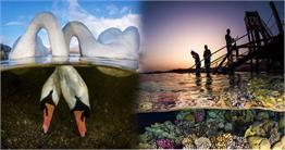इन तस्वीरों में देखिए पानी के नीचे की अनोखी दुनिया