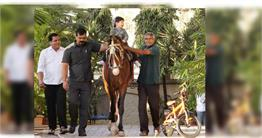 सैफ जैसे हैं तैमूर के नवाबी शौक, घुड़सवारी की तस्वीरें वायरल