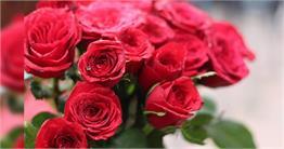 लाल गुलाब ही नहीं इन खूबसूरत फूलों के जरिए करें हमसफर से इजहार-ए-मोहब्बत