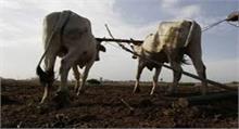 OMG! देश के इस हिस्से में कुंवारी लड़कियां बिना कपड़ों के जोत रही हैं खेत