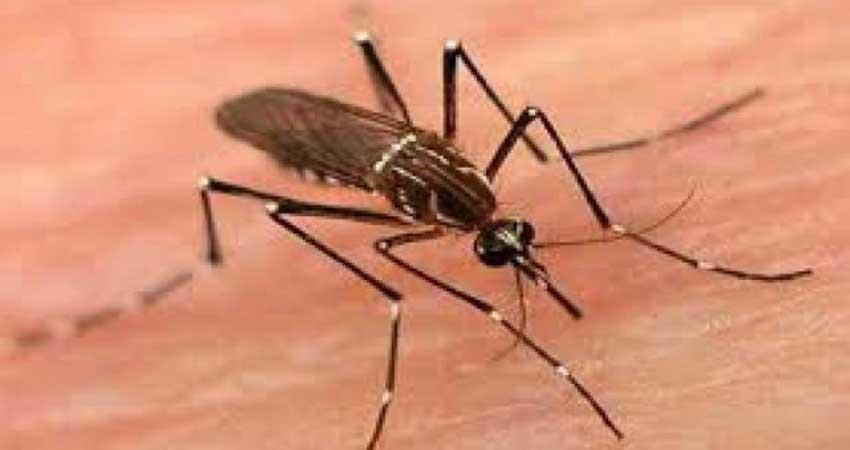 Mosquitoes startling humans, expert surprised by behavior