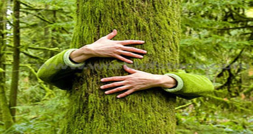 aap-to-stop-cutting-of-trees-through-chipko-movement