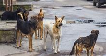 देश में लगातार बढ़ रहा कुत्तों का उत्पात लोगों में भय का माहौल