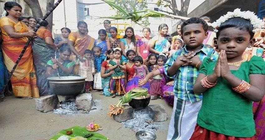 popular festival of south pongal know how to celebrate