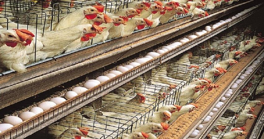bird flu case report in delhi bird flu updates in india  sohsnt