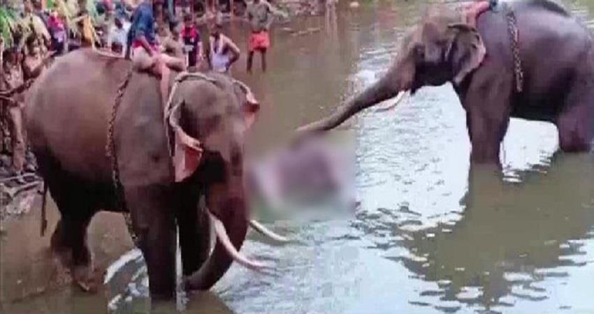 kerala forest minister k raju one accused arrested pregnant elephant death pragnt