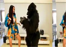 श्रद्धा कपूर ने Gorilla के साथ लगाए ठुमके, वीडियो हुआ वायरल