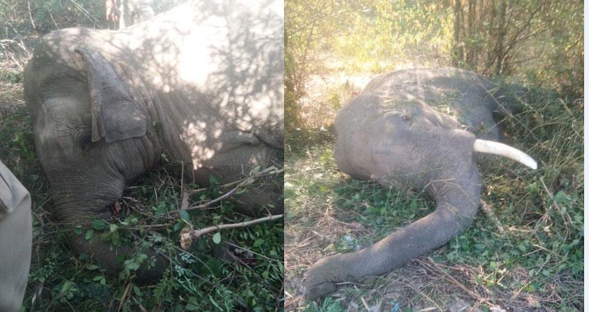 dehradun-nanda-devi-express-flies-two-male-elephants