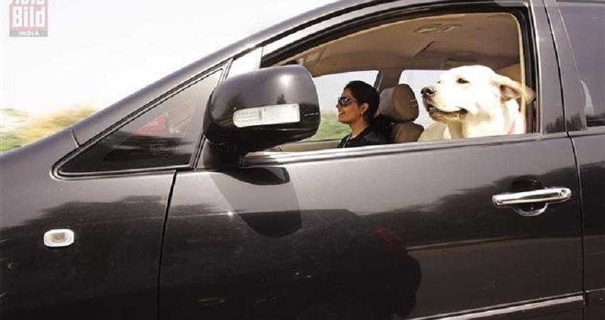 delhi police will not be able to challan on taking pets in the car or bike kmbsnt