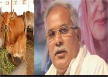 इस कांग्रेस शासित राज्य ने किया गाय का गोबर खरीदने का फैसला, जानें क्या होगा रेट