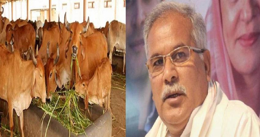 dung will be purchased in chhattisgarh at the rate of rs 2 per kg sohsnt