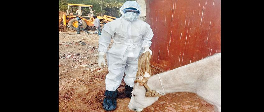 200-samples-taken-from-800-villages-to-check-horses-disease