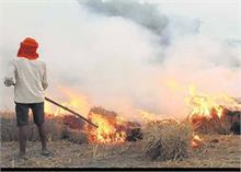 PUNJAB: पराली न जलाने पर किसानों को दिया जाएगा प्रति एकड़ 2500 रुपए मुआवजा