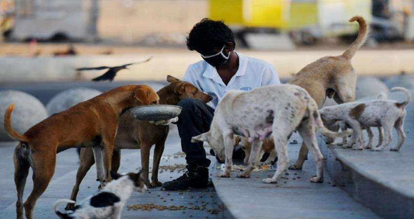 dispute-over-feeding-dogs-delhi-hc-said-interfere-awbi-kmbsnt