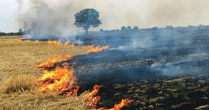burning-of-parali-in-the-fields-will-be-harmful-for-people-lungs-aljwnt