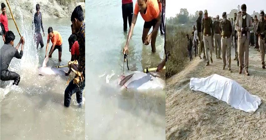 video dolphins killed by lathi killing 3 people in police custody pragnt