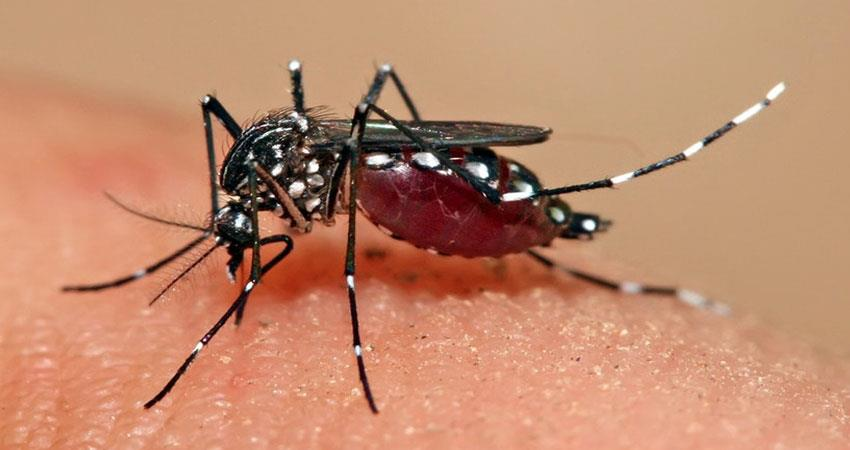 these-tips-will-help-to-prevent-dengue-diseases-in-your-body