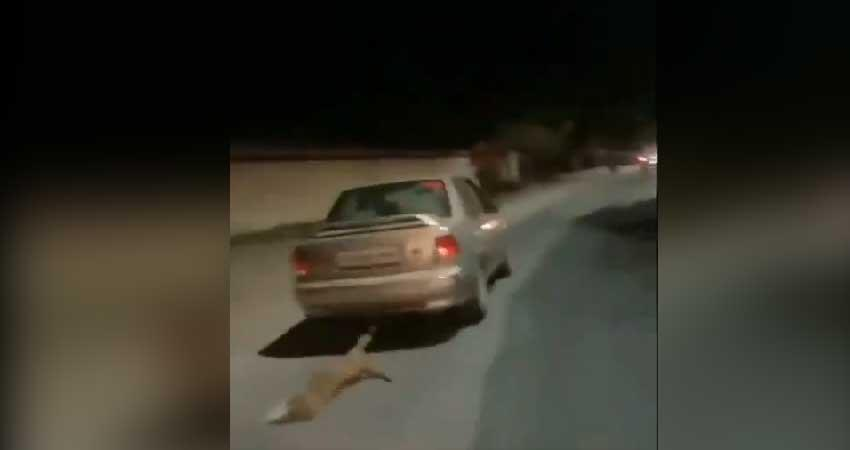 udaipur man drags a dog to car see viral video