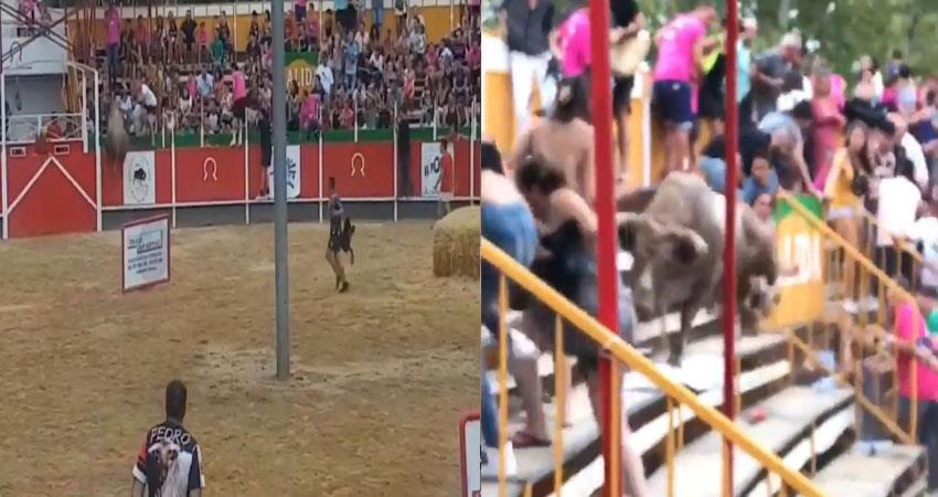 bull attack to auidence while escapes in ring video viral