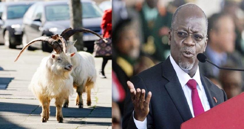 chinese-testing-kit-tanzania-president-john-magufuli-goat-and-fruit-corona-positive-prsgnt
