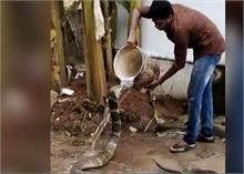 इस शख्स ने किंग कोबरा के साथ किया कुछ ऐसा, Video देखकर दहल जाएगा आपका दिल
