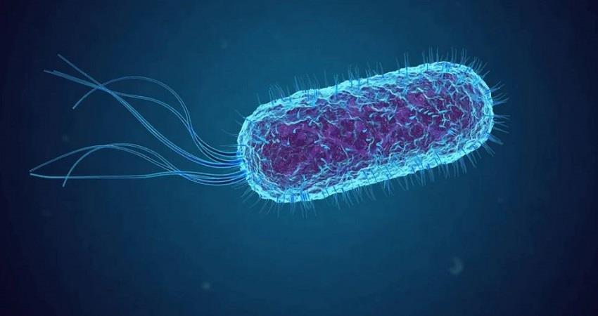 shigella-disease-confirmed-in-ernakulam-kerala-prsgnt