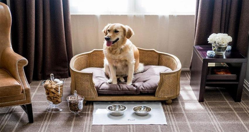 in-this-hotel-special-treatment-to-dogs