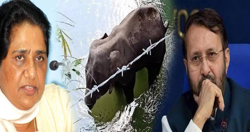 mayawati prakash javadekar angry on pregnant elephant death kerala pragnt
