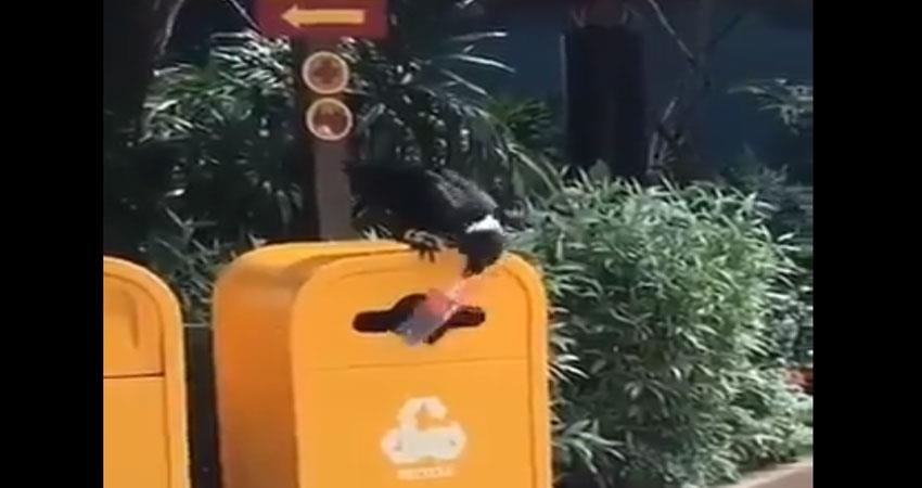 this crows of cleanliness campaign presented the example