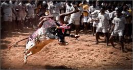 आखिर OSCAR तक कैस पहुंची मलयालम फिल्म 'जल्लीकट्टू', चौंका देंगी आपको यह बातें