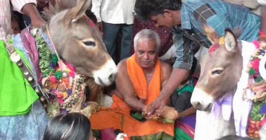 donkey marriage in telangana with full of celebration