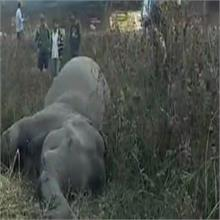 रायपुर वाला क्षेत्र में नंदा देवी एक्सप्रेस की चपेट में आने से मादा हाथी की मौत