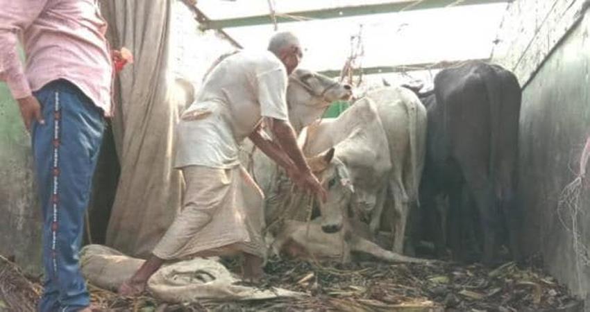 cow smugglers shot cow vigilantes in gurugram haryana