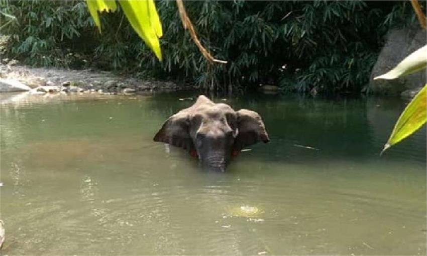 pregnant elephant died a painful death for believing humans vbgunt