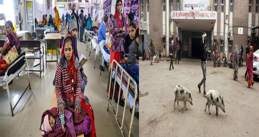 107 children killed in kota jk lon hospital rajasthan pigs roaming in hospital