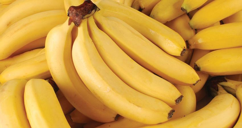 know-the-reasons-why-the-bananas-must-be-included-in-their-diet