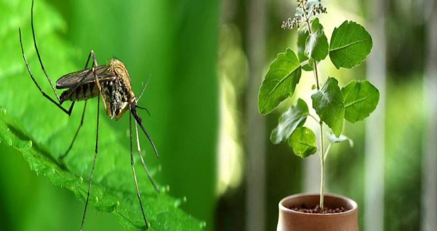 these plants can provide relief from mosquitos