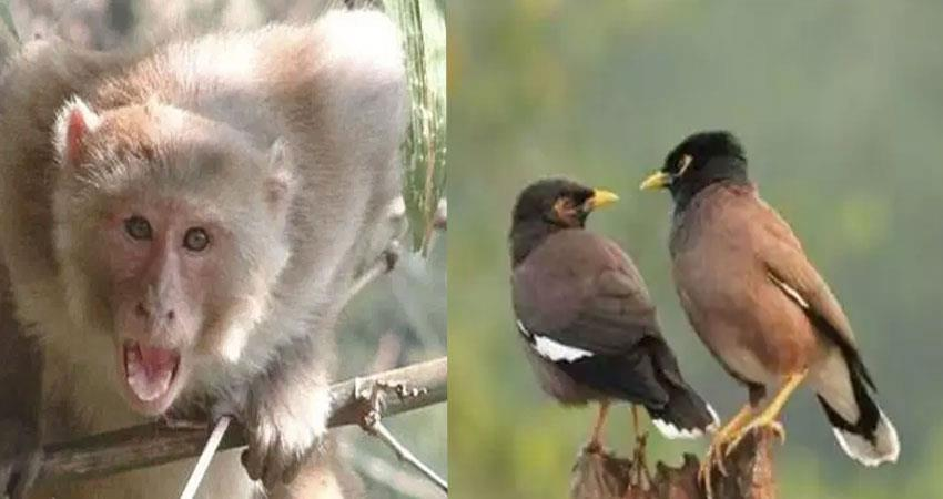 monkeys are hindering the growth of birds offspring