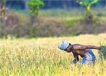 सरकार ने असम-मेघालय समेत इन राज्यों के किसानों को दी आर्थिक राहत, PM स्कीम का मिलेगा पैसा