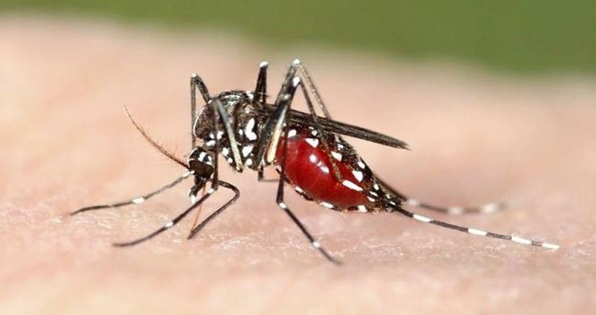 dengue knock in tehri health department is not even aware