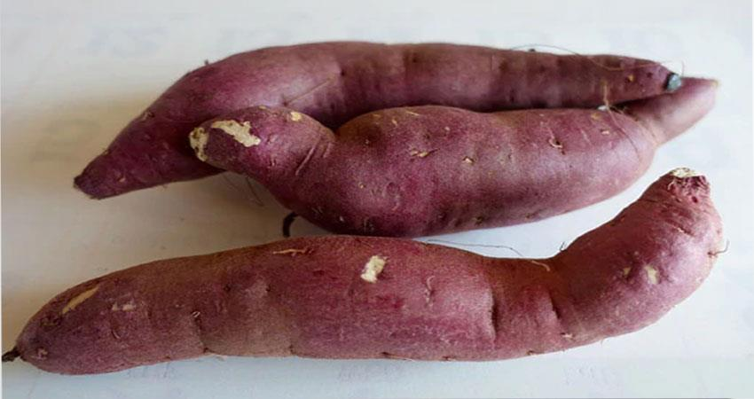 why-sweet-potato-is-beneficial-for-diabetes-patients