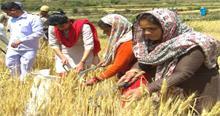 DM सोनिका ने किसान बन कर काटी फसल, सुनीं किसानों की समस्याओं