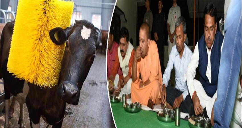 cows-get-bath-with-shampoo-after-announcement-of-of-yogi-arrival-in-dalit-village