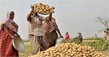 आलू के गिरते दामों ने किसानों को किया बेहाल, लागत निकालना हुआ मुश्किल