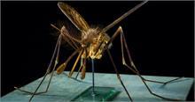 चीन में पाया गया दुनिया का सबसे बड़ा मच्छर, तस्वीर देखकर दंग रह जाएंगे आप