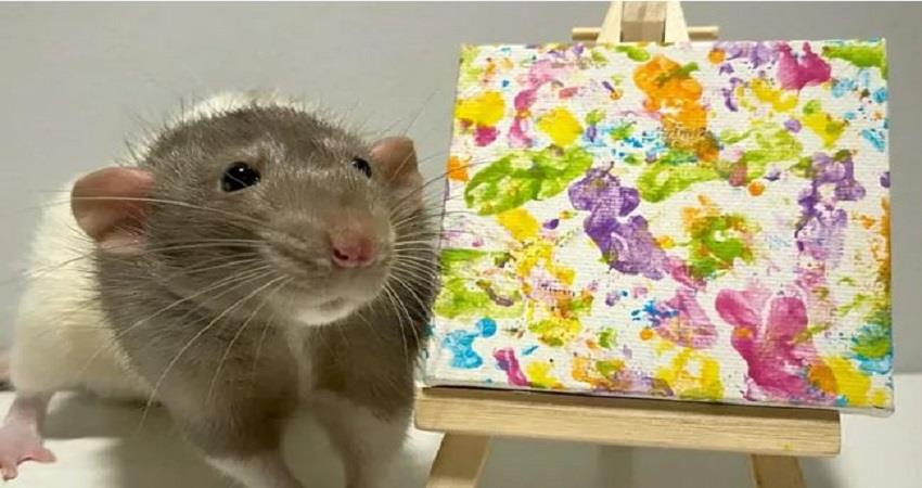 rat-whose-paintings-have-earned-money-pictures-viral-prsgnt