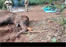 केरल में हथिनी की दर्दनाक मौत पर सीएम विजयन ने कहा- तीन संदिग्धों पर टिकी हमारी नजर