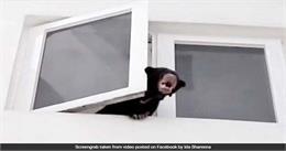 Viral Video : ....जब सिंगर ने कुत्ता समझ पाल लिया जंगली भालू