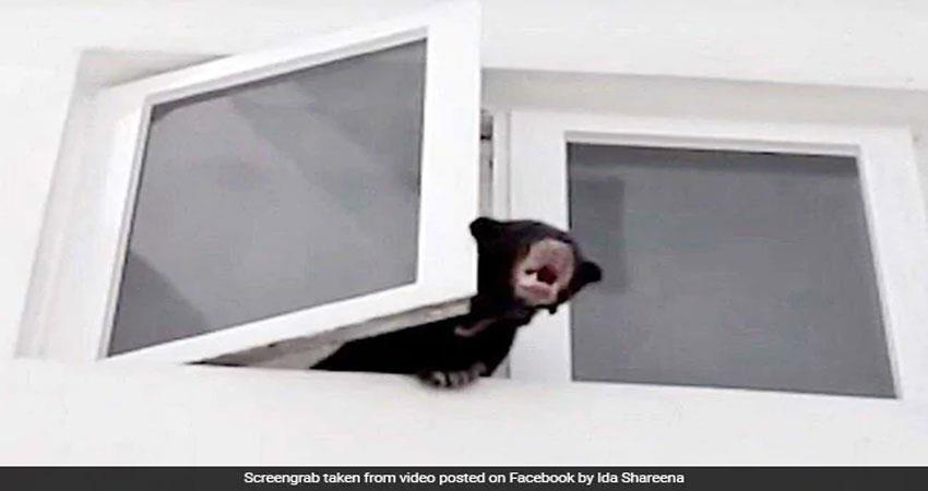 viral-video-when-malaysian-singer-took-understanding-dog-wild-bear