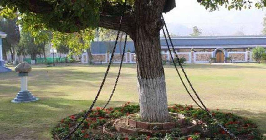 this tree has been imprisoned since 121 years not getting bail